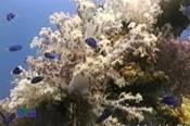 Fujikawa_Maru_Soft_Coral_Blue_Cromas_.jpg