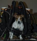 MantaRay_the_Jack_Russell_with_KISS_Sport.jpg